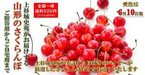さくらんぼバナー_01